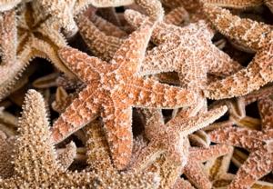 Sea Star Gazing Adventure Aquarium Program