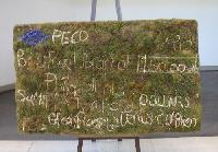PECO's moss check