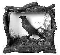 Grip the Raven