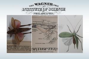 Entomology Six-Week Series