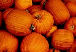 Pumpkin Thursdays