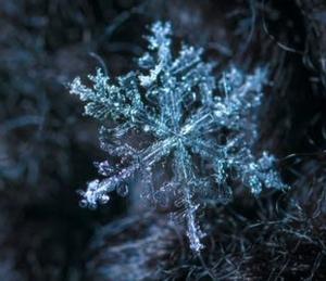 Winter Fun After School:  Salt Painting Snowflakes