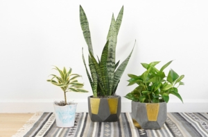 Houseplant workshop and Plant Swap