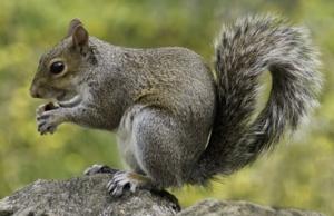 See - Squirrels!  Virtually
