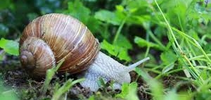Touch - Snails! Virtually
