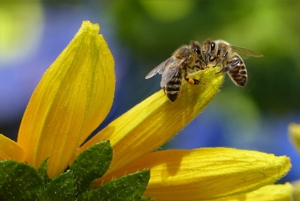 Family Class: All About Bees and Honey