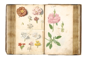 Art Book Club online: Botanical Sketchbook