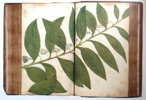 Art Book Club online: Botanical Sketchbook