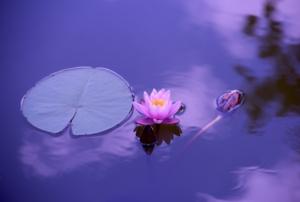 Virtual Mindfulness Meditation via Facebook Live
