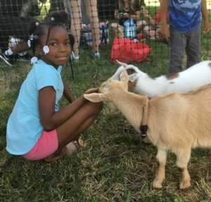 Philly Goat Project in Norris Square Park