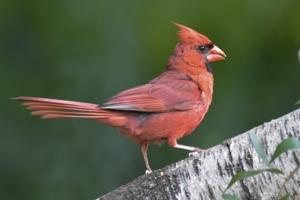 Ask a Bird Scientist!