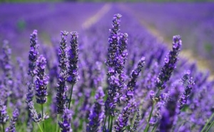 Self Care Thursday:  Lavender Sachets