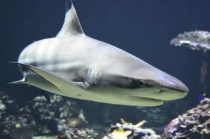 Virtual Summer of Wonder: Shark Attack!