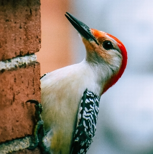 Bird Lover's Club for Kids