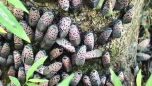 Invasive Species Outdoor Craft