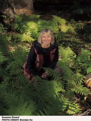 VIRTUAL - Suzanne Simard | <i>Finding the Mother Tree: Discovering the Wisdom of the Forest</i>