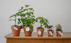 Herb Growing Take and Make Kits