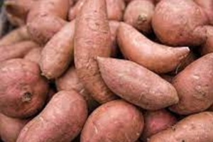 Cook-Along with Books & Cooks: We Root for Sweet Potatoes!