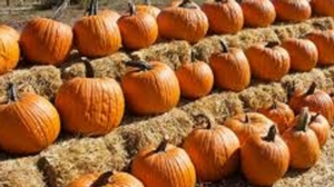 Cook-Along with Nourishing Literacy: Family Style Pumpkin Party!