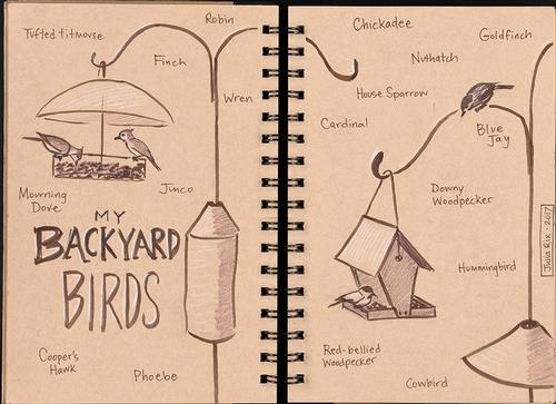 This sketchbook page by local illustrator Julia Rix may inspire you to sketch the birds you see from your window!