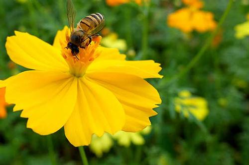 Happy National Honey Bee Day!