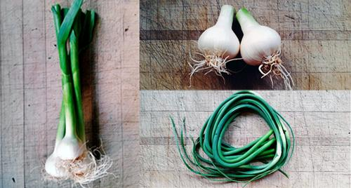 Garlic—The Plant That Keeps On Giving