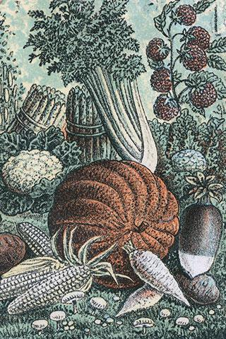 Pumpkin detail from Dreer's Garden Calendar, Chromolithograph, Historical Images of Philadelphia