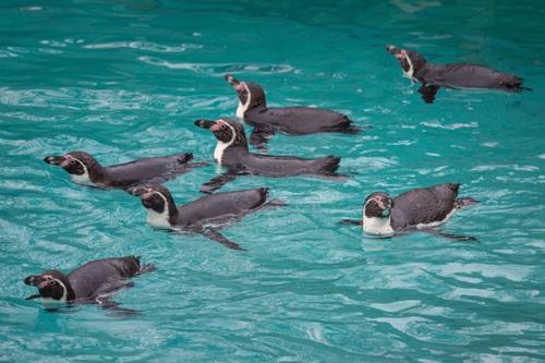 Penguins, Penguins, Penguins!