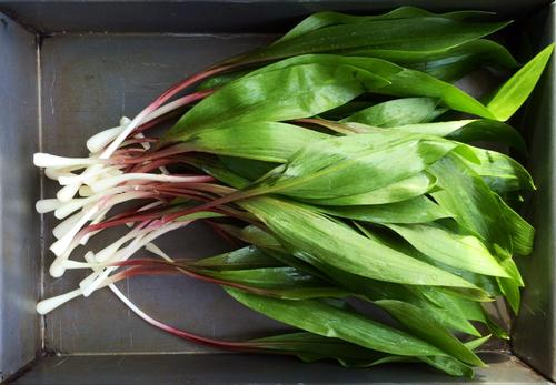 Use wild ramps this spring to make a knock-out pesto sauce.