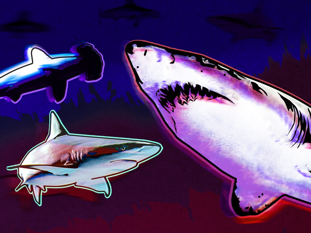 What better time than Shark Week to dive into our Digital Media offerings for some more shark-related recommendations?