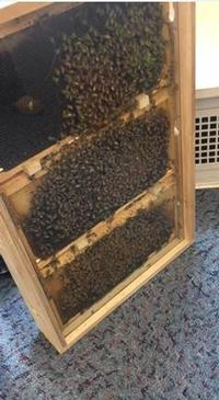Bees in the library? Bees in the libary!