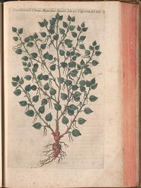 From the <i>In Our Nature: Flora and Fauna of the Americas</i> exhibitionon display in our Rare Book Department's Dietrich Gallery, April 9 through September 15, 2018.