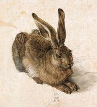The Hare by Albrecht Dürer, Courtesy Albertina