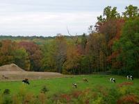 The farm at Saul High School