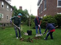 Wells Fargo volunteers plant trees at Oak Lane Library.