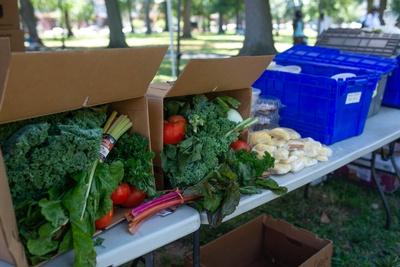 BunnyHopPHL grew to an organization feeding over 350 families a week.