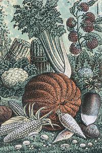 Pumpkin detail from Dreer's Garden Calendar, Chromolithograph, Historical Images of Philadelphia