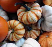 Piles of pumpkins!