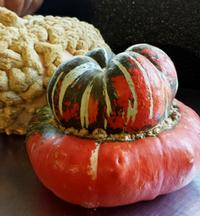 Turban pumpkin