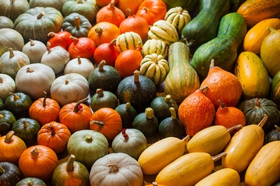 There are so many kinds of squash!